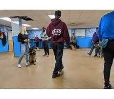 Dog training boston area.aspx Video