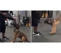 Dog training breaks.aspx Video