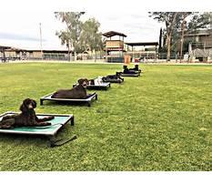Dog training camp philadelphia Video