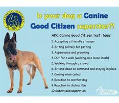 Dog training cgc test Video