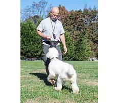 Dog training charlotte nc Video