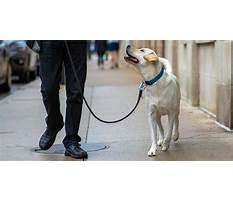 Dog training chicago Video