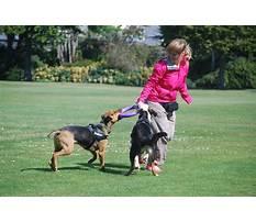Dog training christchurch Video