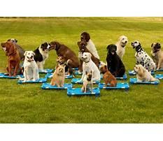Dog training class Video