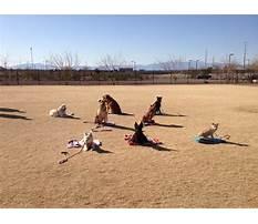 Dog training classes henderson nv Video