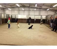 Dog training classes kings heath birmingham.aspx Video