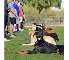 Dog training classes Video