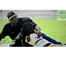 Dog training clearwater fl Video