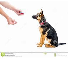 Dog training clicker method Video