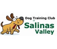Dog training club of salinas valley Video