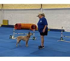 Dog training club of tampa Video