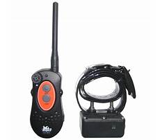 Dog training collars dt systems Video