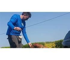 Dog training cork.aspx Video