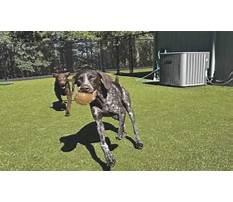 Dog training corvallis.aspx Video