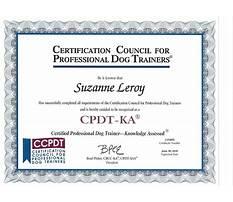 Dog training cpdt Video