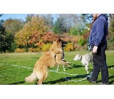 Dog training crawley Video