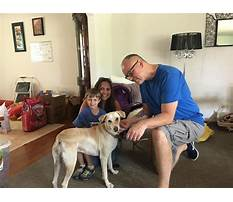 Dog training crystal lake il Video