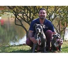 Dog training ct Video