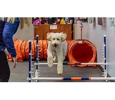Dog training culver city.aspx Video