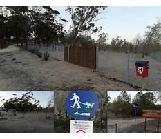 Dog training cyprus nicosia Video