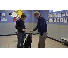 Dog training dfw Video