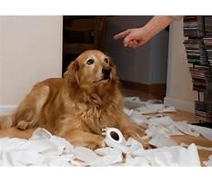 Dog training discipline Video