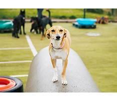 Dog training dspca Video