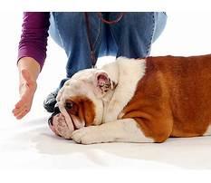 Dog training durban Video