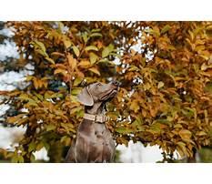 Dog training dyker heights Video