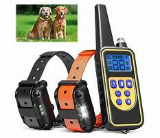 Dog training e collars Video