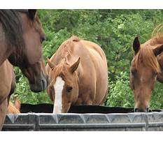 Dog training eagan mn.aspx Video