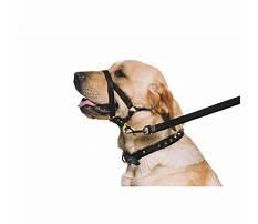 Dog training ebay Video