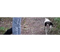 Dog training eccleston Video