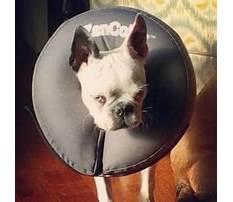 Dog training echo park Video