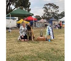 Dog training echuca Video