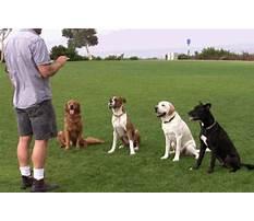 Dog training ecourse Video