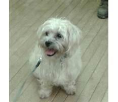 Dog training eggbuckland Video