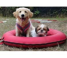 Dog training egham Video