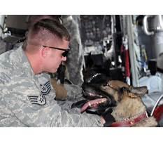 Dog training eglin afb Video