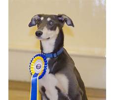 Dog training egremont Video