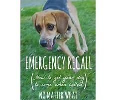 Dog training emergency recall Video