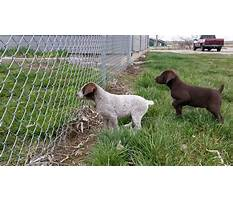 Dog training emmett idaho Video