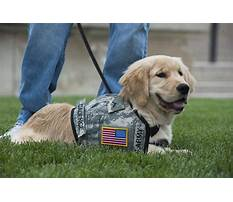 Dog training emotional support Video