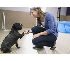 Dog training employment Video