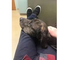 Dog training emporia ks Video