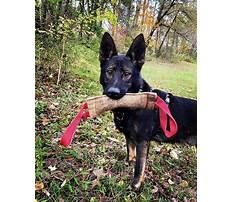 Dog training ephrata pa Video