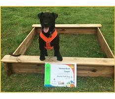Dog training essex and suffolk Video