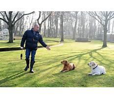 Dog training essex Video