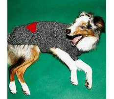 Dog training etobicoke area Video