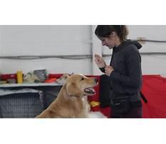 Dog training etobicoke ontario Video